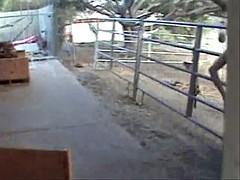 Spank on the farm 2